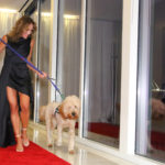 Doggies on the Catwalk Celebrates 12 Fabulously Furry Years